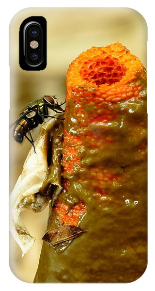 Tip Of Stinkhorn Mushroom With Fly IPhone Case