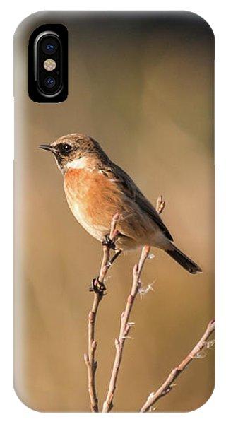 Stonechat IPhone Case