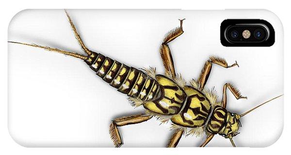 Stonefly Larva Nymph Plecoptera Perla Marginata - Steinflue -  IPhone Case