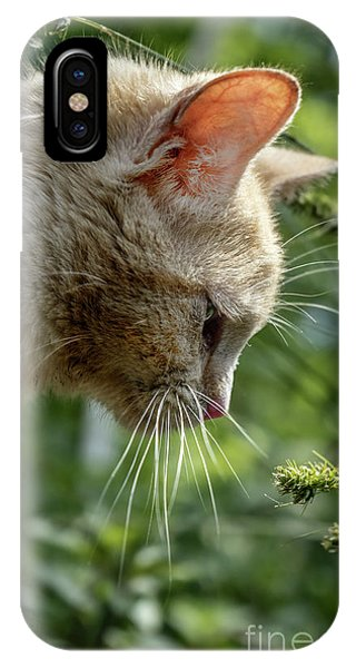 Stop And Smell The Flowers 9433a IPhone Case