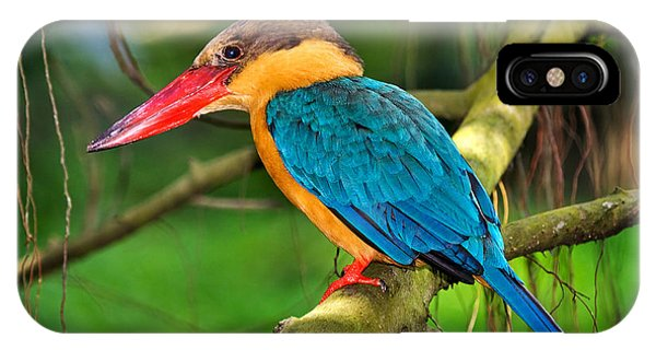 Stork-billed Kingfisher IPhone Case