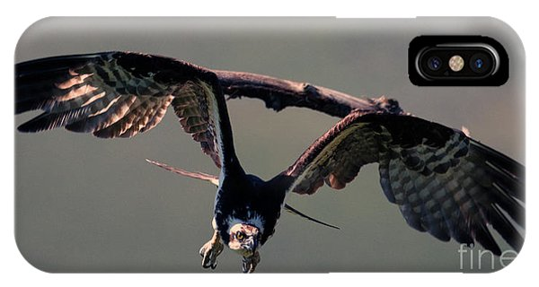 Ospreys iPhone Case - Straight At You by Mike Dawson