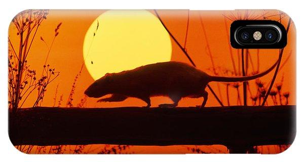 Stranglers Rattus Norvegicus Rat IPhone Case