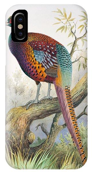 Strauchs Pheasant IPhone Case