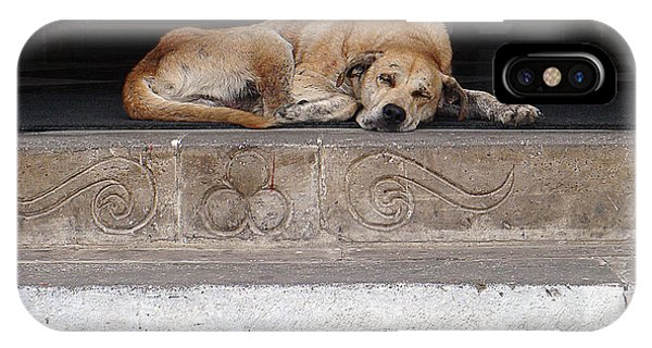 IPhone Case featuring the photograph Street Dog Sleeping On Steps by Karen Zuk Rosenblatt
