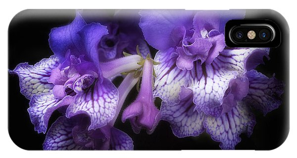 Streptocarpus 'blue Frills' IPhone Case
