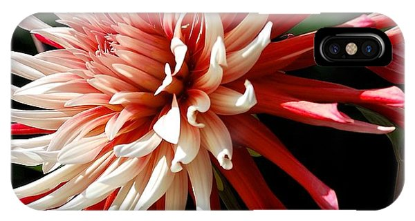 Striking Dahlia Red And White IPhone Case