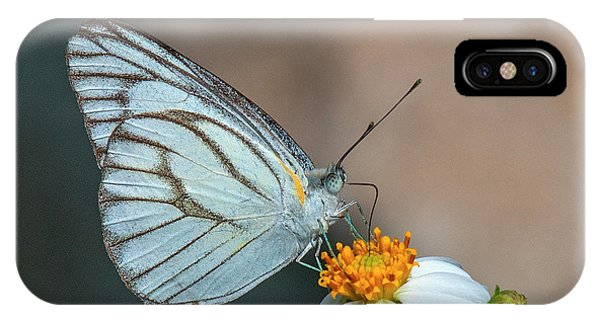 Striped Albatross Butterfly Dthn0209 IPhone Case