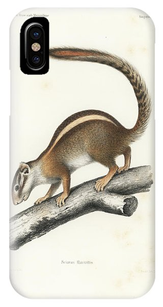 IPhone Case featuring the drawing Striped Bush Squirrel, Paraxerus Flavovittis by J D L Franz Wagner