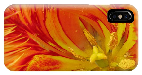 Striped Parrot Tulips. Olympic Flame IPhone Case