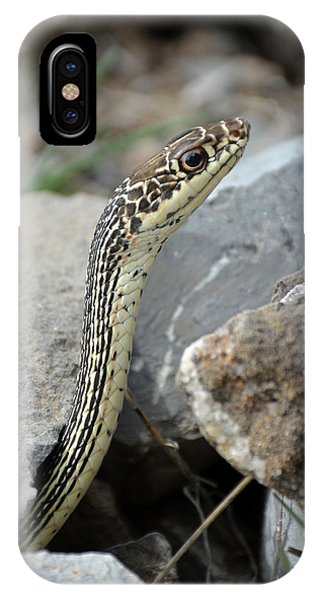 Striped Whipsnake, Masticophis Taeniatus IPhone Case