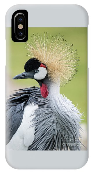 Strutting My Stuff IPhone Case