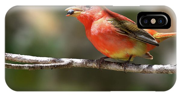 Stuffed Summer Tanager IPhone Case