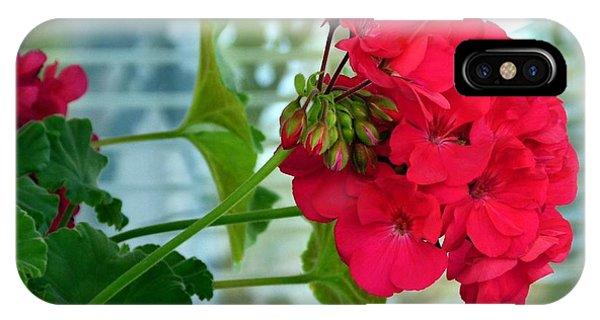 Stunning Red Geranium IPhone Case