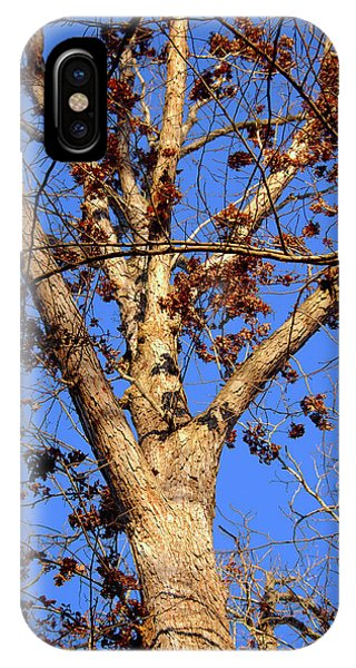Stunning Tree IPhone Case