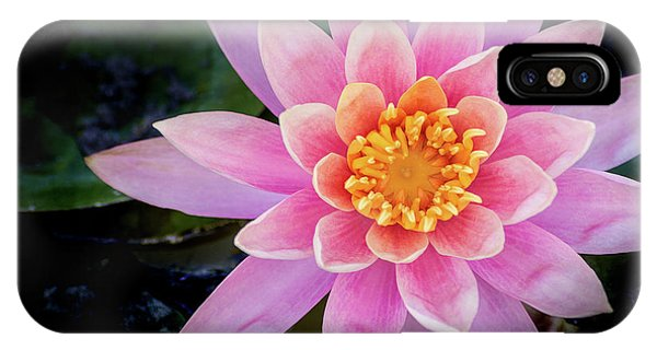 Stunning Water Lily IPhone Case