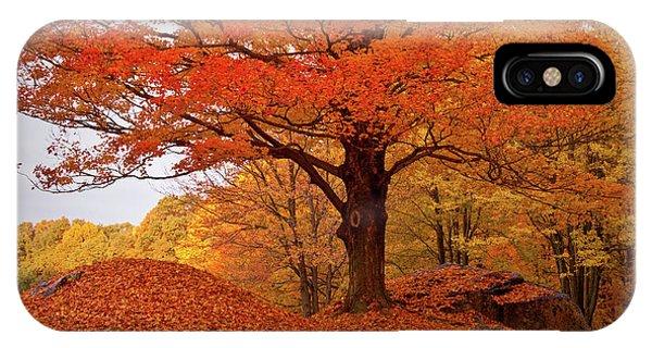 Sturdy Maple In Autumn Orange IPhone Case