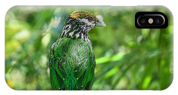 Subtropical Forest Dweller IPhone Case