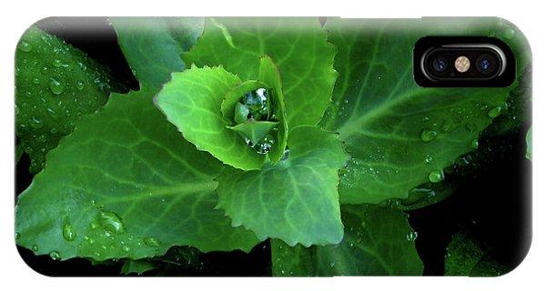 Succulent After The Rain  IPhone Case