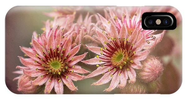 Succulent Flowers - 365-100 IPhone Case