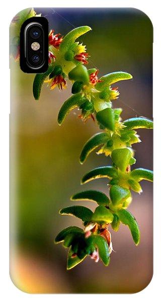 Succulent Hanging IPhone Case
