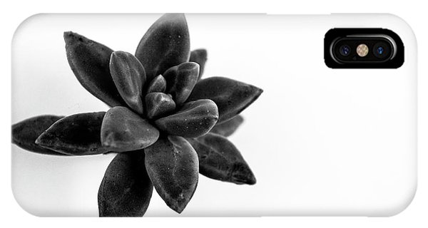 Succulent iPhone Case - Succulents Flowers by Ana Martinez