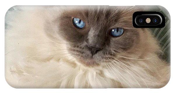 Sugar My Ragdoll Cat IPhone Case