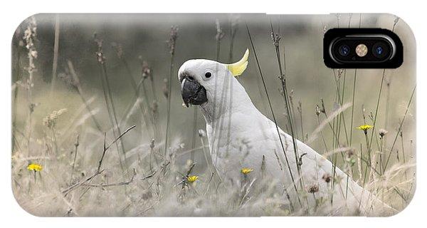Sulphur Crested Cockatoo IPhone Case