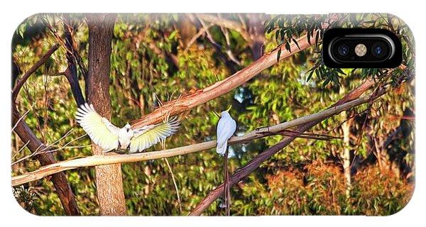 Sulphur Crested Cockatoos - Australia IPhone Case