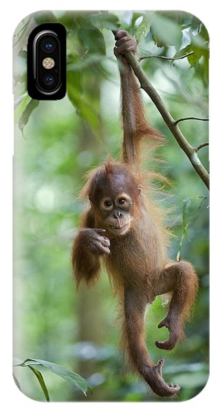 Sumatran Orangutan Pongo Abelii One IPhone Case