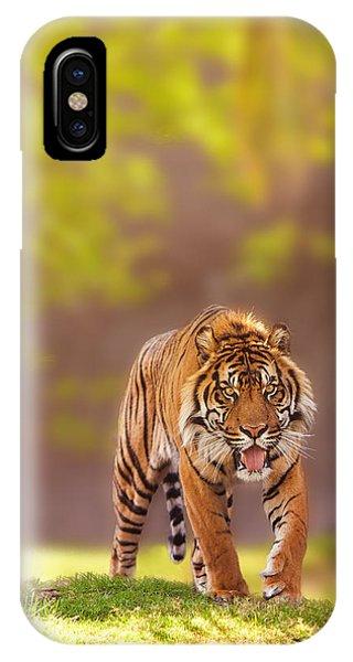 Sumatran Tiger Walking Forward IPhone Case