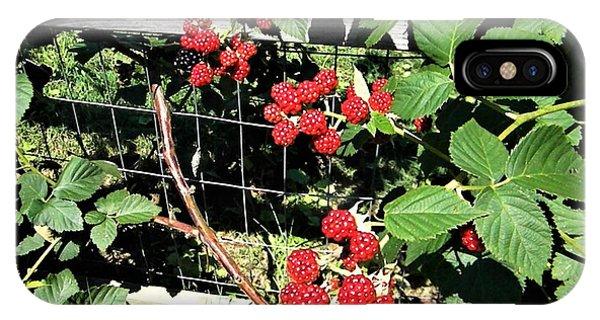 Summer Blackberries IPhone Case
