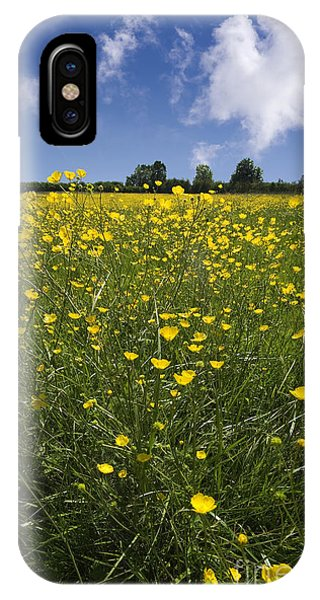 Summer Buttercups IPhone Case