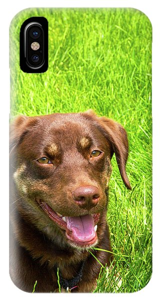 All In The Family iPhone Case - Summer Dog by Karol Livote