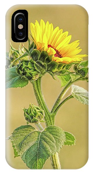 IPhone Case featuring the photograph Summer Sunflower Floral by Jennie Marie Schell