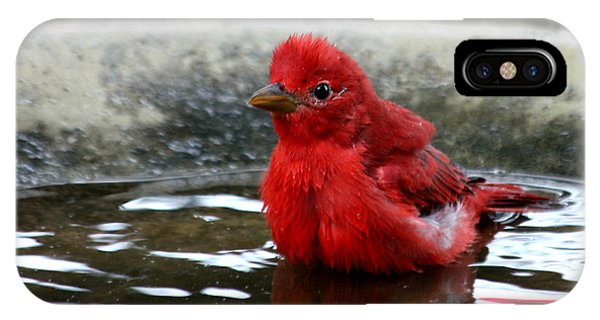 Summer Tanager In Bird Bath IPhone Case