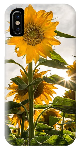 Sun And Sunflowers IPhone Case