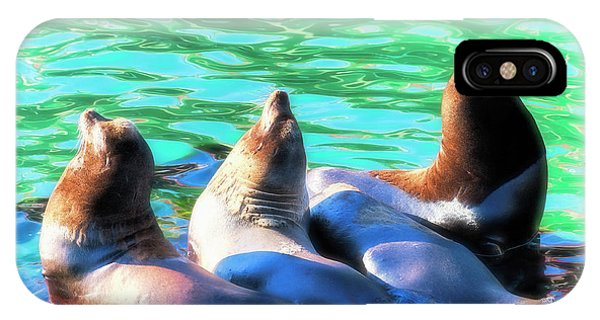 Sun Basking Seals IPhone Case