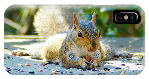 Sun Bathing Squirrel IPhone Case
