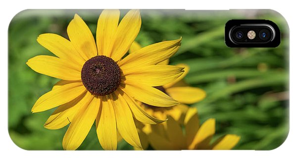 Sun Drenched Daisy IPhone Case