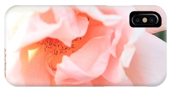 Sun-drenched Rose IPhone Case