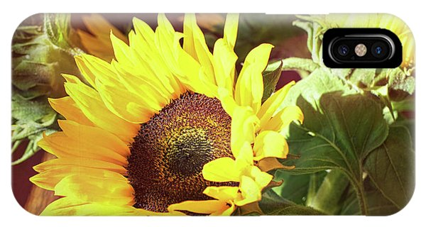 IPhone Case featuring the photograph Sun Of The Flower by Michael Hope