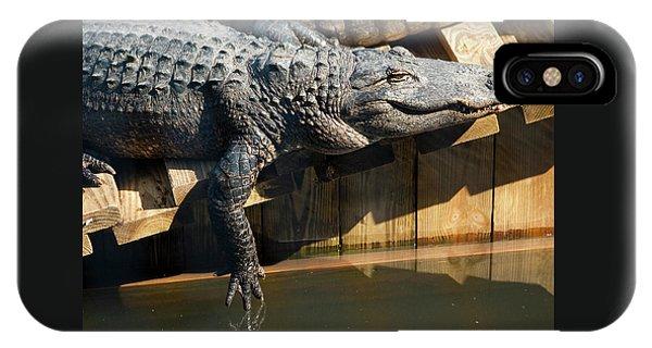 Sunbathing Gator IPhone Case