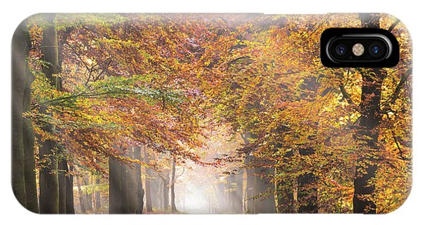 Sunbeams In A Forest In Autumn IPhone Case