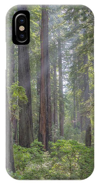 IPhone Case featuring the photograph Sunbeams Through The Forest by Paul Schultz