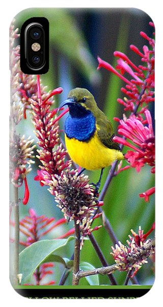 iPhone Case - Sunbird by Holly Kempe
