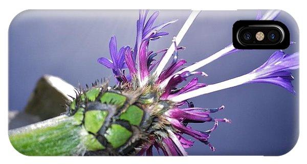 Sunburst Cornflower IPhone Case