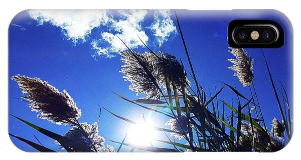 Sunburst Reeds IPhone Case
