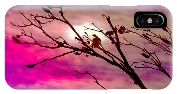 iPhone Case - Sundown by Holly Kempe
