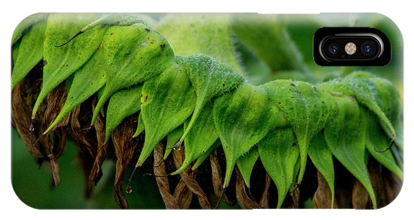 IPhone Case featuring the photograph Sunflower 2017 1 by Buddy Scott